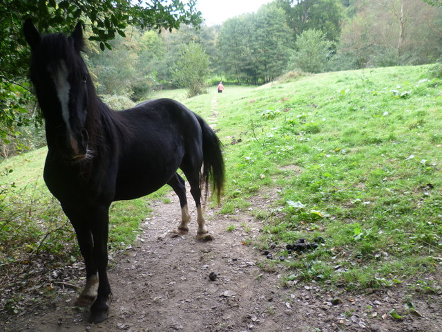 Horse on a footpath