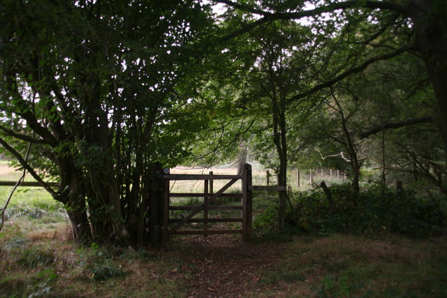 Footpath into Town Wood