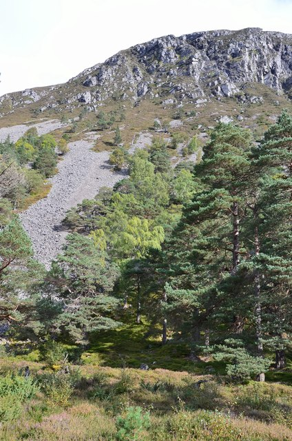 Hillside below Creag na Gaibhre, Glen Feshie
