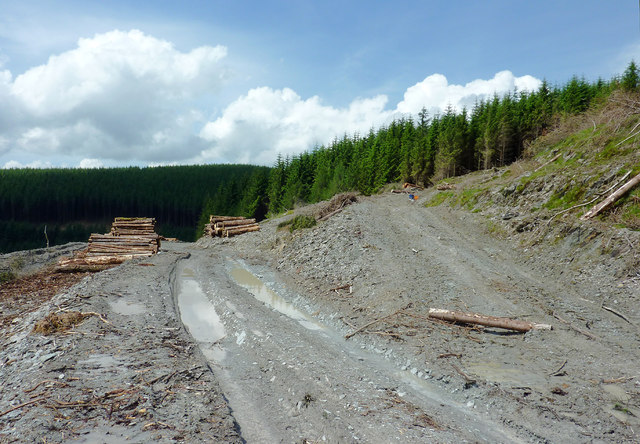 Forestry road junction near Nant-y-Fedw, Powys