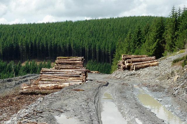 Forestry road in Cwm Nant-y-Fedw, Powys