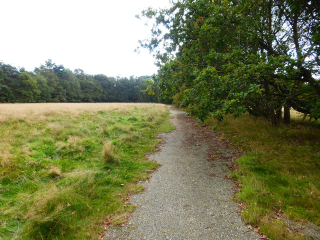 Path by Bourley Camping Ground looking south