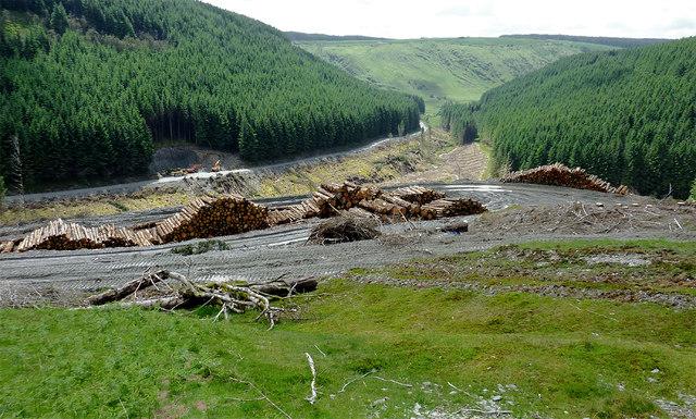 Forest and Cwm Nant-y-Fedw, Powys