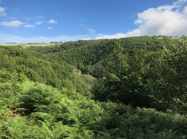A Green Gorge