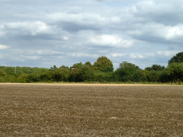 Field near Palegates Farm