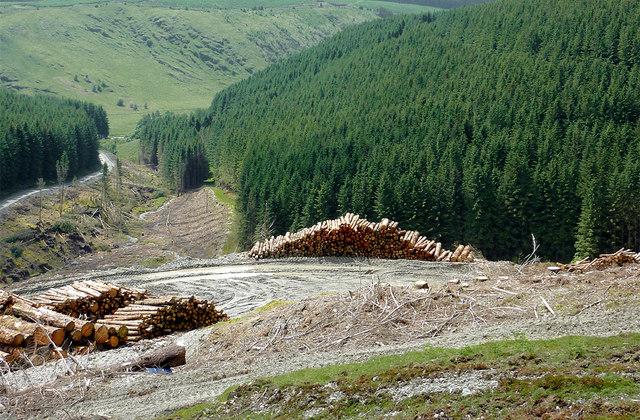 Coniferous forest in Cwm Nant-y-Fedw, Powys