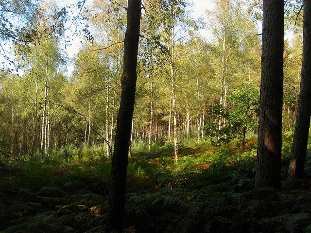 Naillards Wood