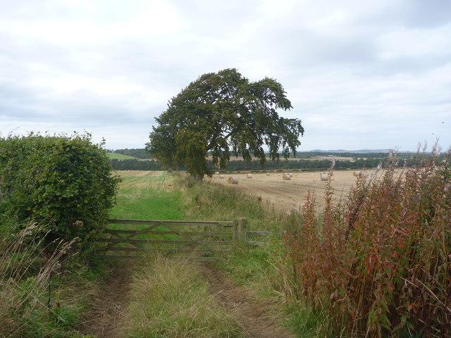 Rural East Lothian : Field Entrance Near Marvingston
