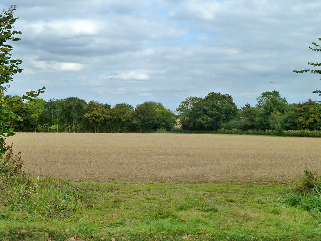 Stubble field east of Henham Road
