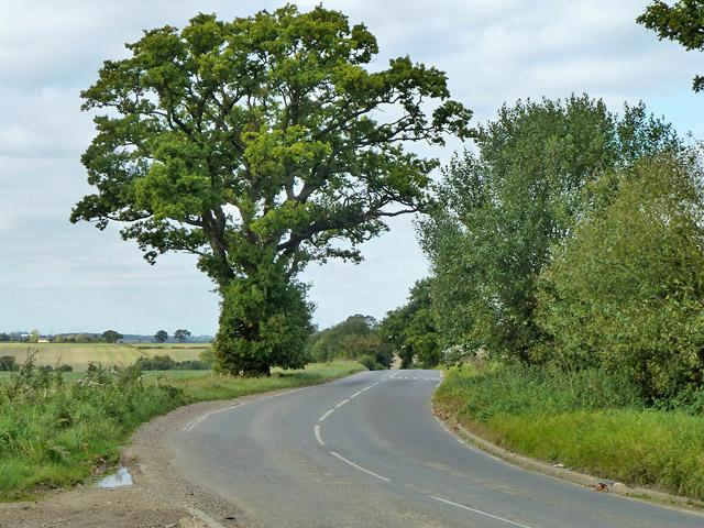Oak by Debden Road