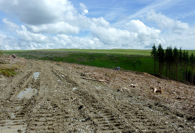 From forest to moor near Bryn Mawr, Powys
