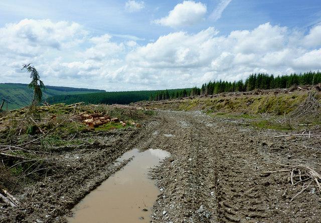 Forestry road south of Drygarn Fach, Powys