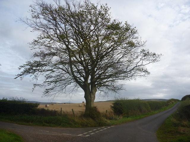 East Lothian Landscape : The Junction Tree