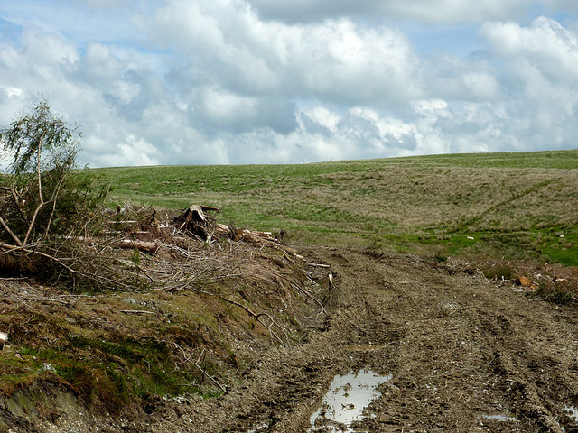 Forest road and moorland south of Drygan Fach, Powys