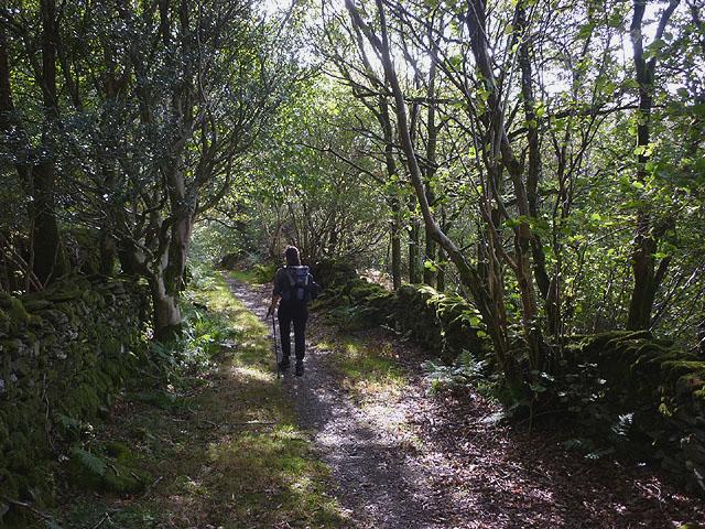 Track below Glade Haw