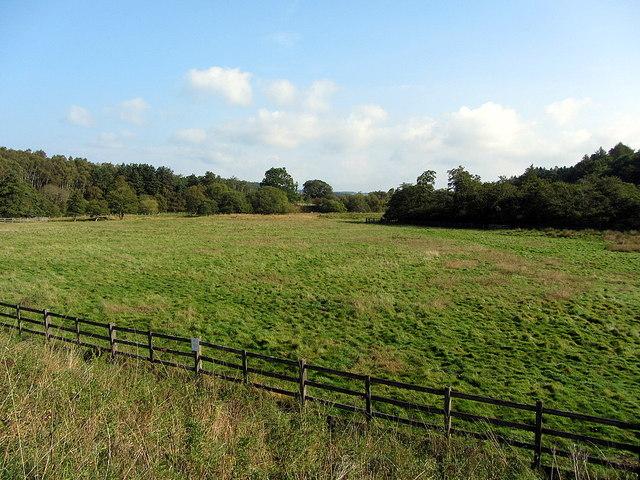 Nature Reserve at Carrick's Haugh