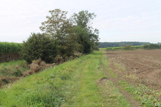 Farm track off Pelham Road