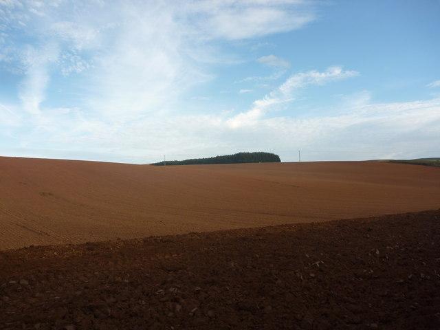 East Lothian Landscape : Ploughed Field Near Newlands
