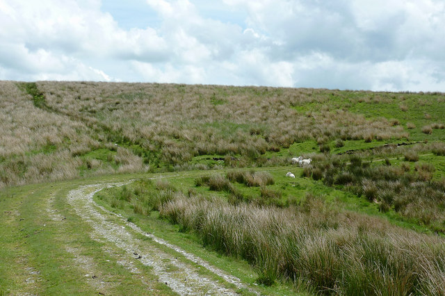 Forestry road and moorland south-east of Bryn Mawr, Powys