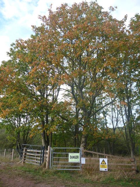 Rural East Lothian : Danger!  Autumn's On Its Way!