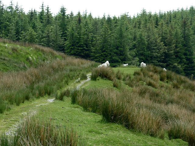 Forestry road near Nant-y-Fedw, Powys