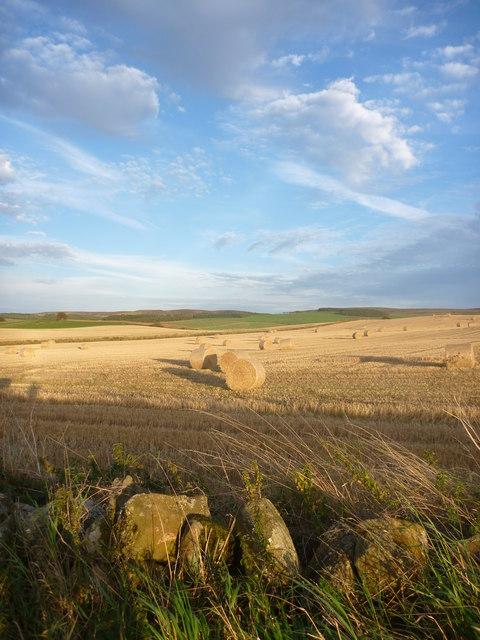East Lothian Landscape : Evening Light Near Carfrae