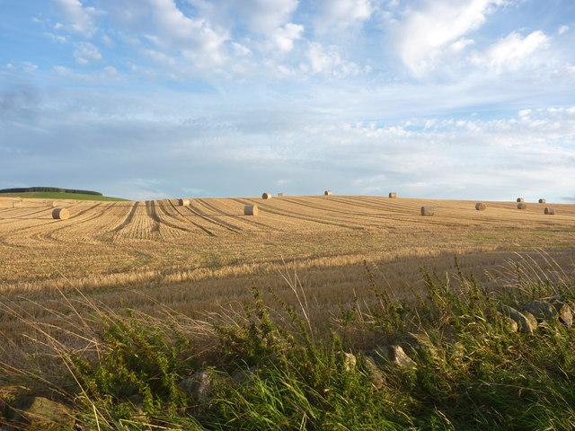East Lothian Landscape : Random Distribution