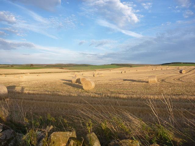 East Lothian Landscape : Evening Fieldscene Near Carfrae