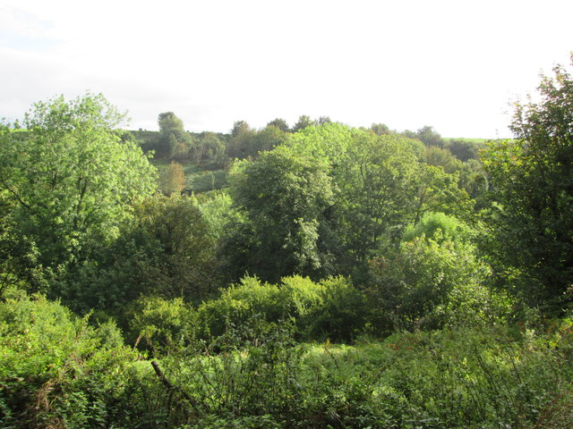 Looking  over  Sawdon  Dale