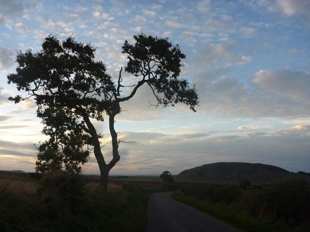 East Lothian Landscape : Tree And Traprain