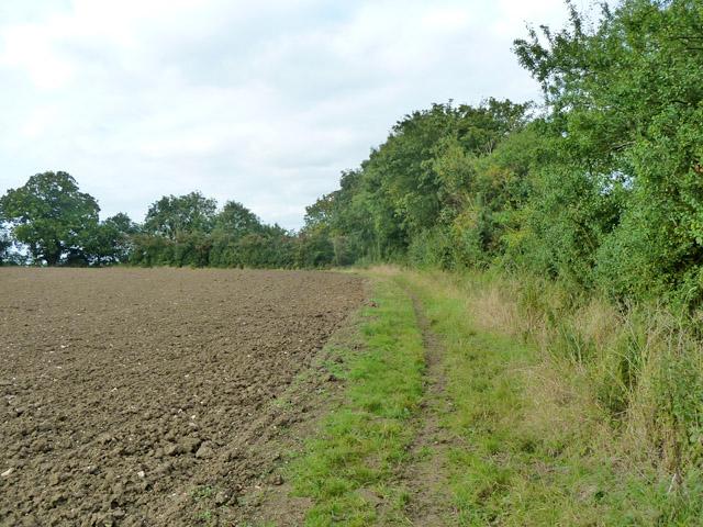 Footpath along field edge