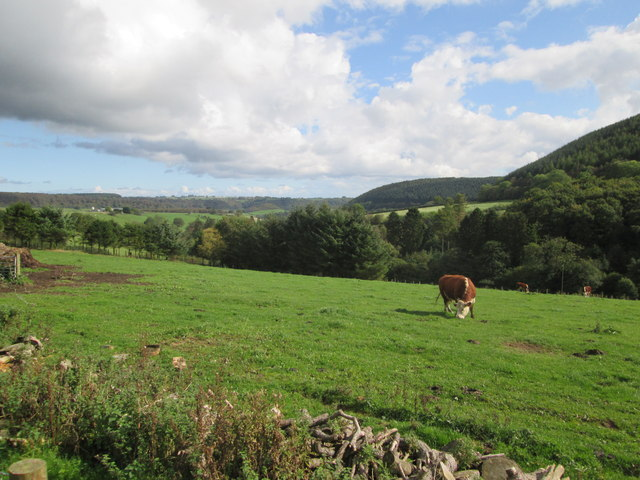 Pasture  in  the  dale,  forest  either  side