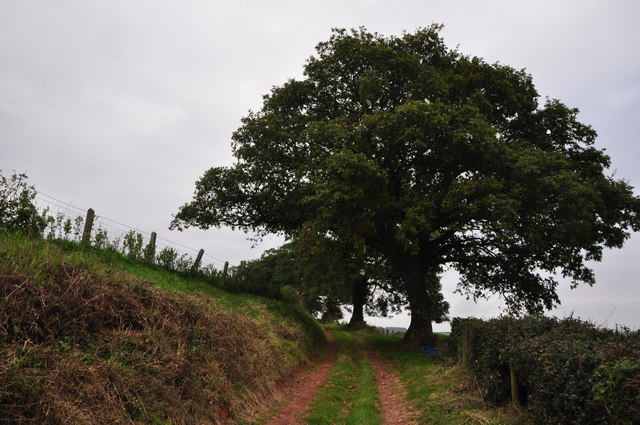 Mid Devon : Armourwood Lane