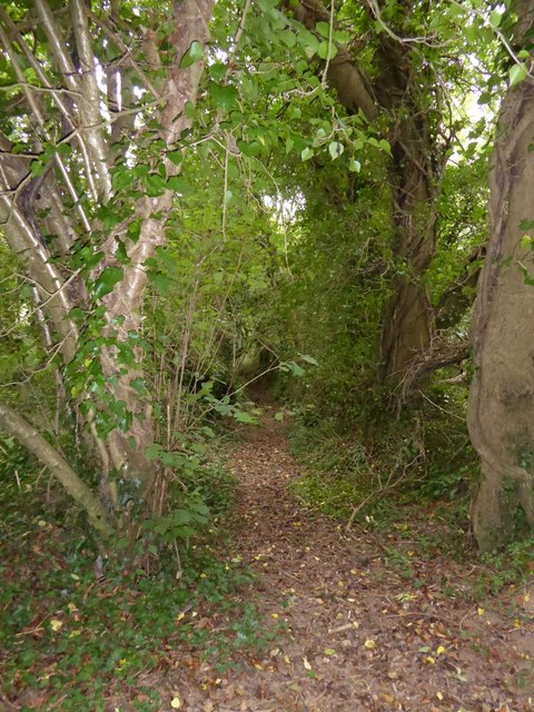 Footpath through the woods on Drake's Hill (1)