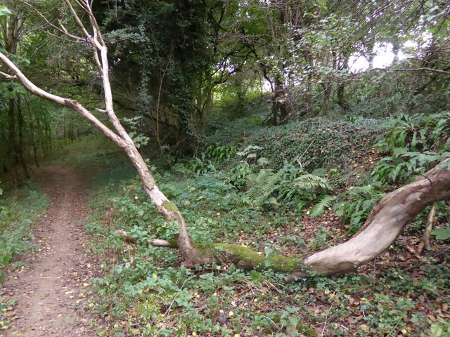 Footpath through the woods on Drake's Hill (2)