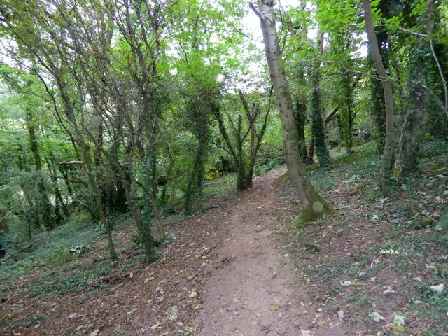 Footpath through the woods on Drake's Hill (3)