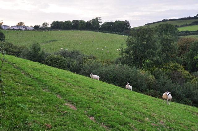 Mid Devon : Grassy Hillside