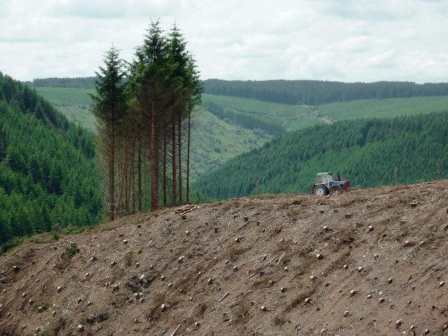 Forest in Cwm Nant-y-Fedw, Powys