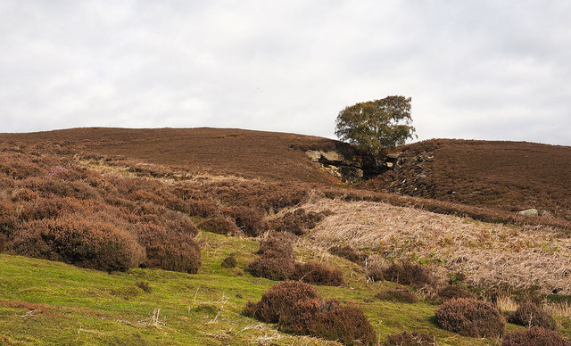 Tree with crag