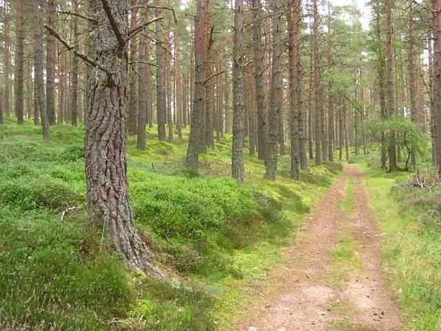 Track, Muir of Alvie