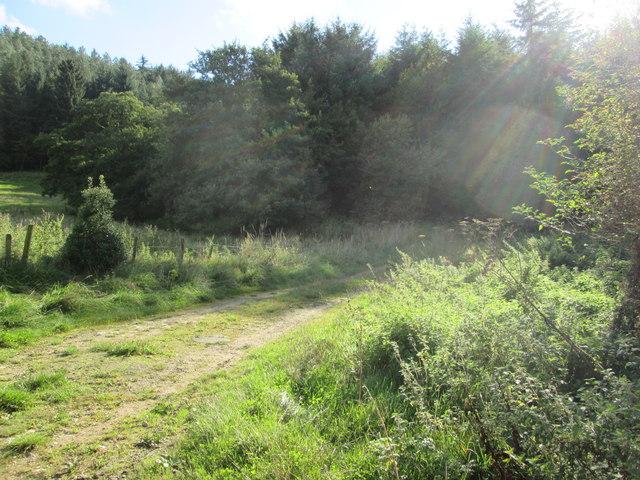 Sunlight  track  in  Wykeham  Forest