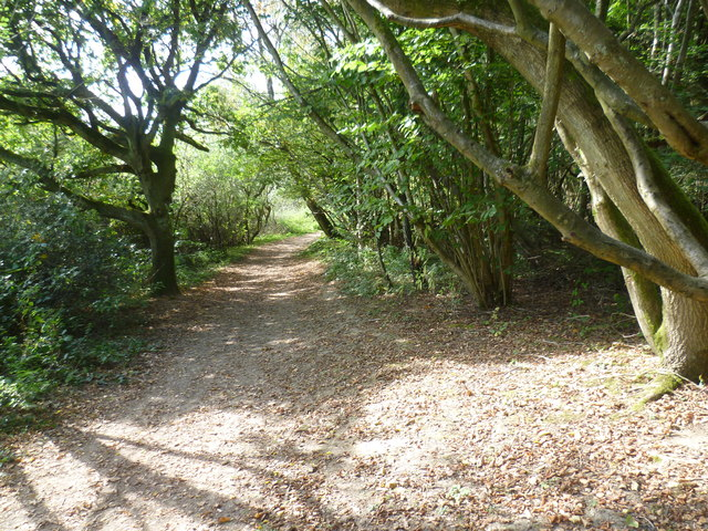 The Greensand Way on One Tree Hill