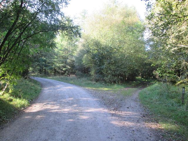 Great  Moor  Road  in  Wykeham  Forest