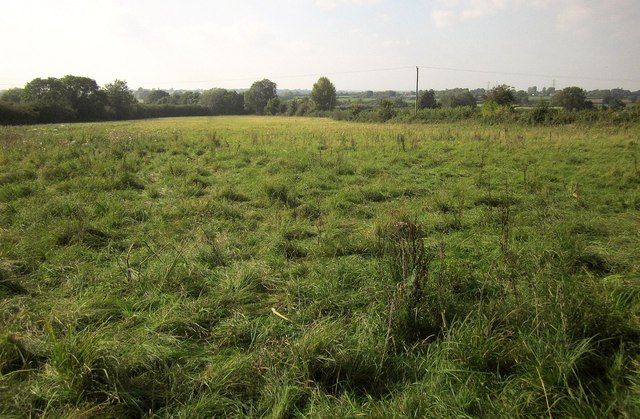Field, Little Sodbury