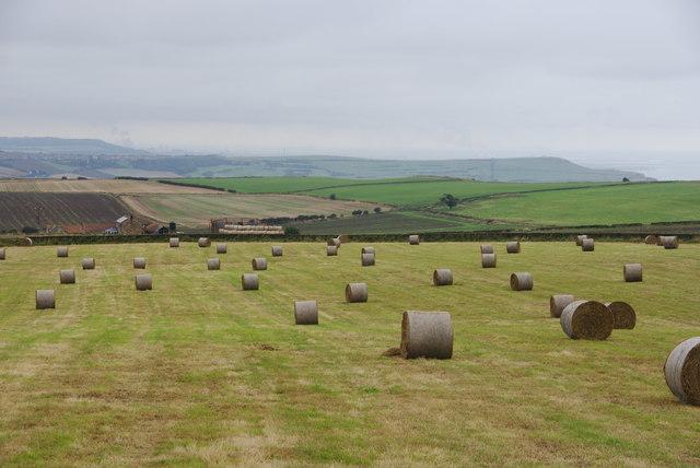 Fields above Rockcliffe Farm