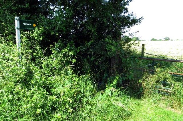 Footpath to Piddington Wood