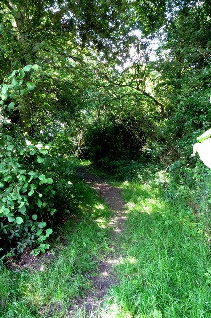 Footpath in Piddington Wood