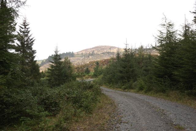Clear felling on John's Hill