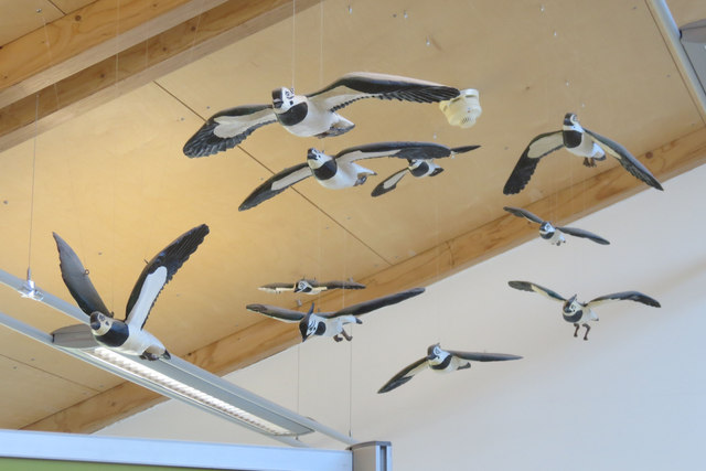 """""""Lapwings"""" in the Visitor Centre, College Lake, near Tring"""