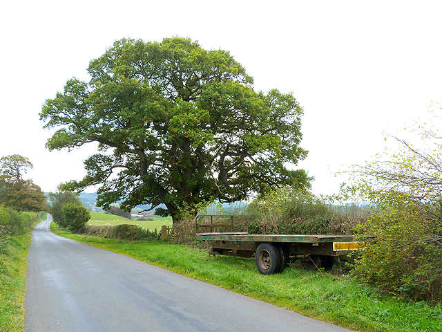 Trailer and oak tree